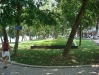 The park by Hoan Kiem lake